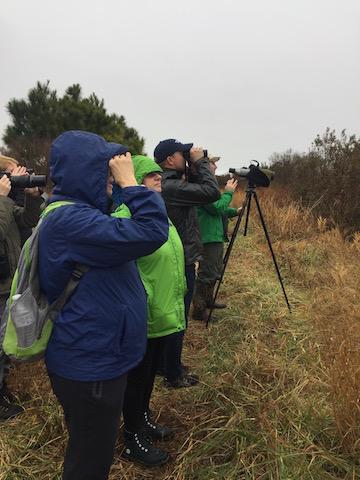 nature, outdoors, environment, trip, birding