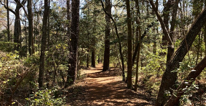 Virtual Walk on the Cape Henry Trail at First Landing State Park