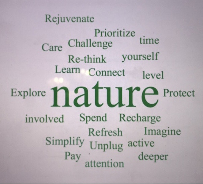 nature, outdoors, environment