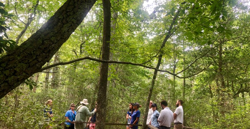 Naturalist Guided Forest Walk