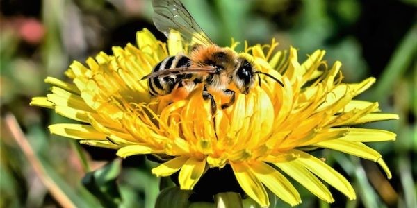 NB_imagine_Pollinators_IMG