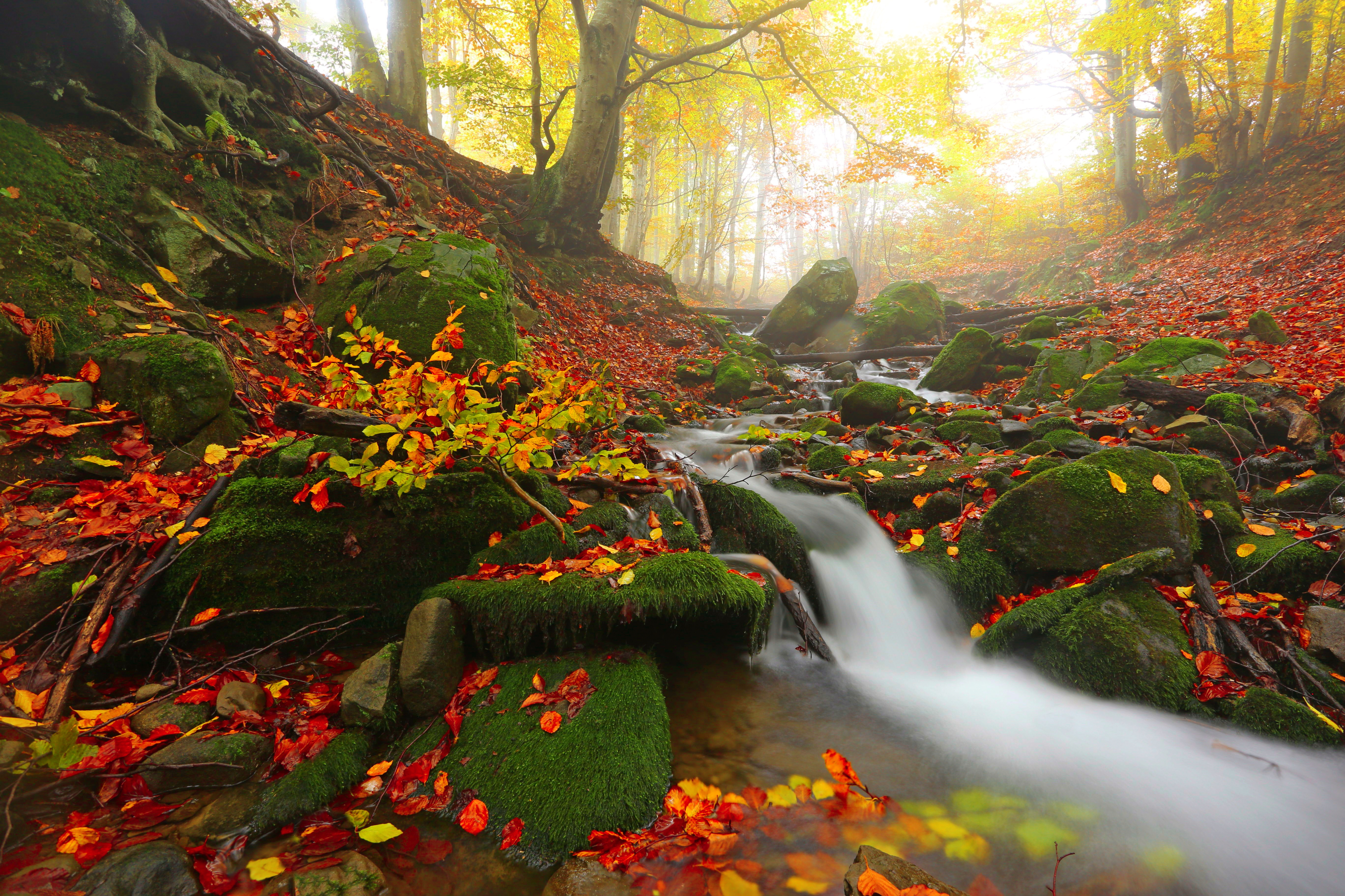 Fall colors in the mountains with flowing creek