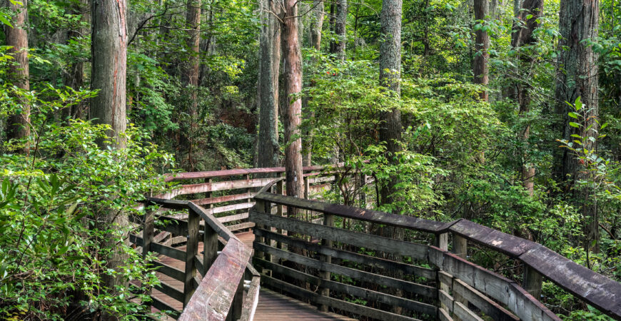 Virtual Walk on the Bald Cypress Trail at First Landing State Park