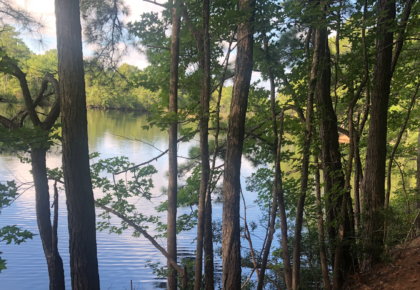 Virtual Walk and Tree ID at Lake Lawson/Lake Smith Natural Area