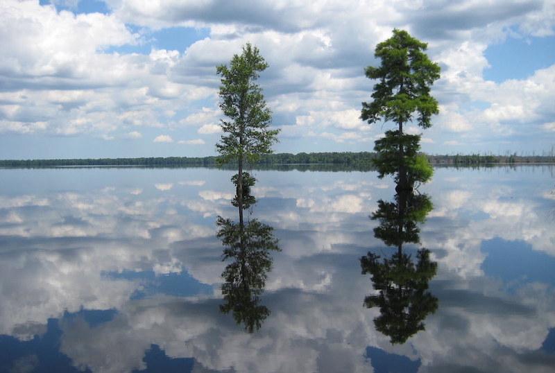 Great Dismal Swamp