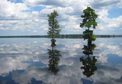 Virtual Tour of the Great Dismal Swamp