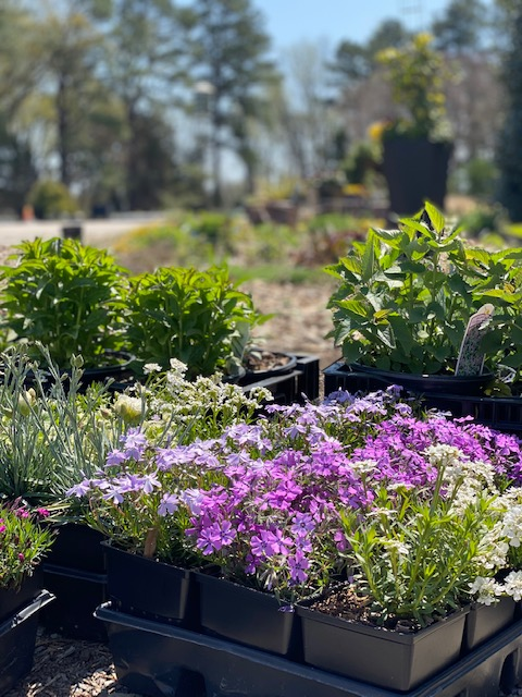 Gardening with perennials for pollinators