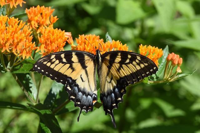 Nature Tour Pollinator