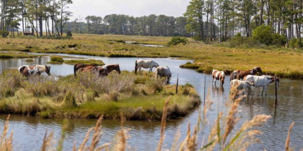 chincoteague tour 3