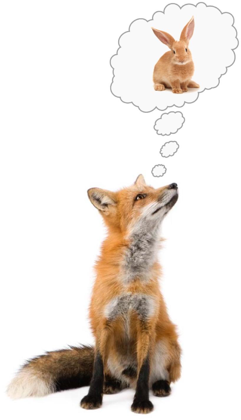 Fox daydreaming