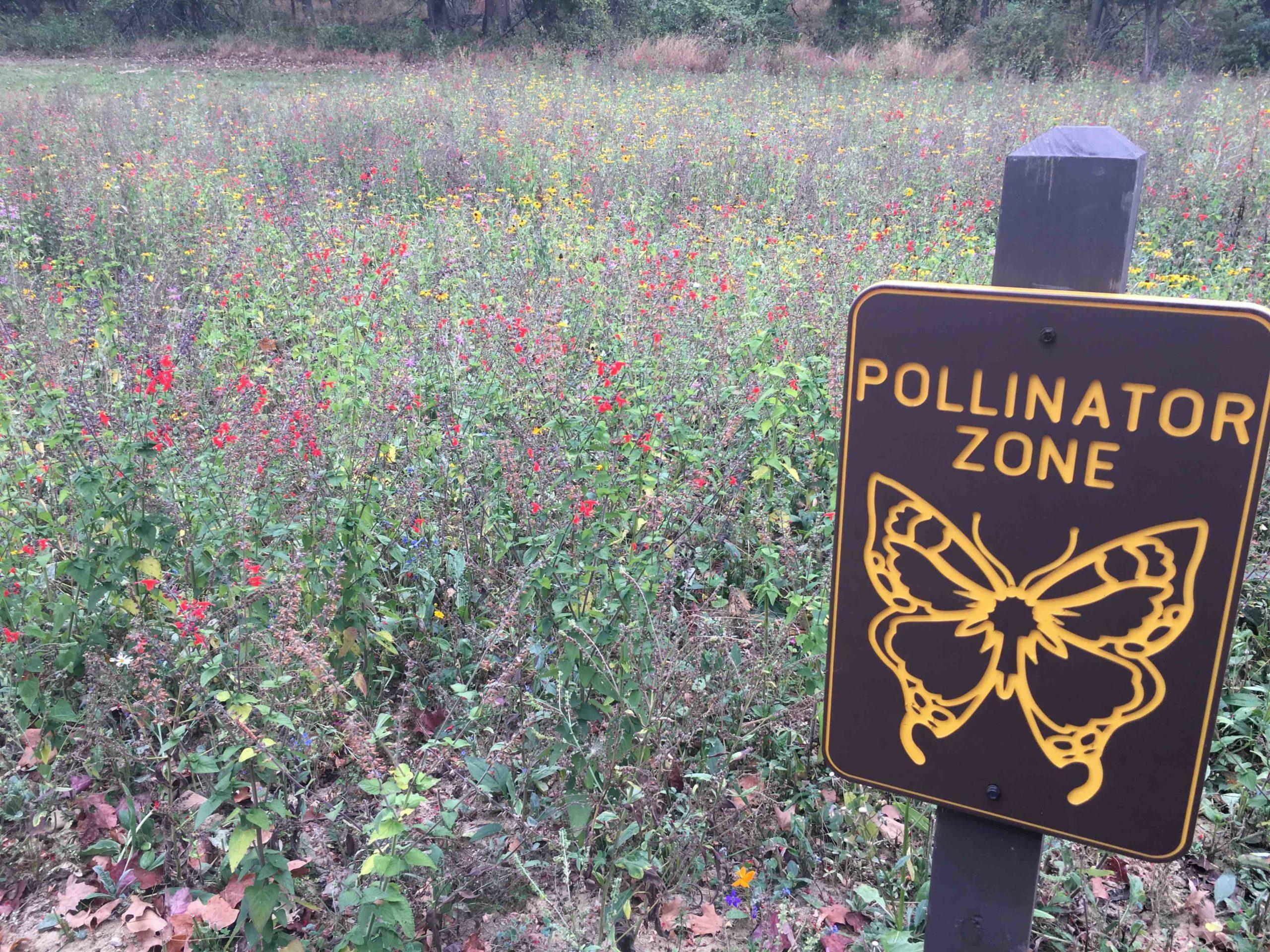 Pollinator Field